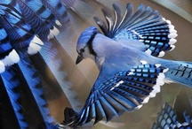 bird beauties / BIRD WATCHING..HOW TO CHILL!