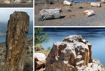 petrified wood forest
