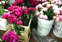 Peony Flower Arrangements & Bouquets / Peony flower arrangements, bouquets and centerpieces  / by Fly Me To The Moon Florists