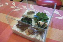 terrarium mini