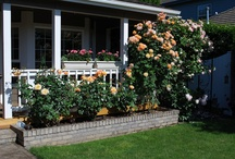 My Roses and Yard / Love roses, hydrangeas, and all flowers! / by Peggy White