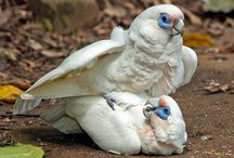 parrot 888