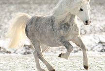paardje voor Lauraine sophie
