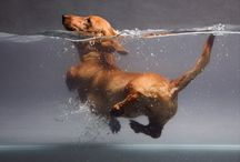 Plivac