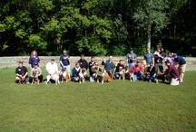 Pet Blogs & Groups / by All God's Creatures Pet Services
