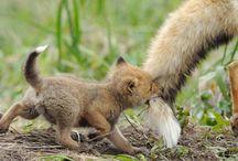 Animals We Adore