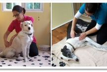 Holistic Therapies for Animals