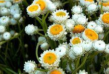 Λουλουδια & φυση