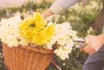 ::Spring Fling/Summer Fun / by Linda Heath
