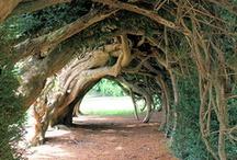 I <3 Trees!