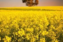 KONINGKAART • Yellow wedding / Is geel jouw lievelingskleur? Dan is een geel tintje op jou bruiloft natuurlijk onmisbaar! Vind hier meer inspiratie!