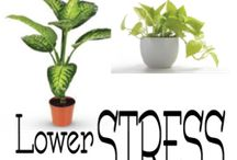 plants for stress