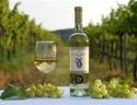 Sykora Fine Wines / Cosy winery, based in Limbach, Slovakia. Providing wine experience
