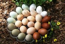 Eggs / by Bernie♥