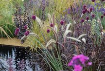 Chelsea Flower Show& other Exhibitions