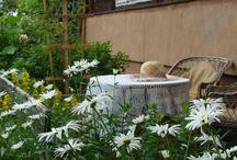Miejsce wypoczynku / wizytówka ogrodu