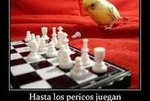 animales frases