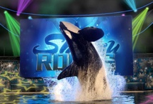 SeaWorld <3 <3 <3 <3 / by Mallory Evans