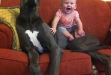 Dogs / Kaili