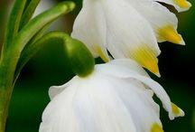 çiçek dunyası