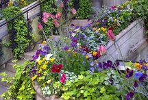 creative garden / by Nichol Wilson