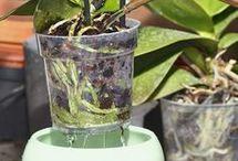 Entretien orchidées