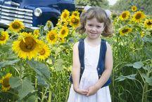 Sunflower Field Photography