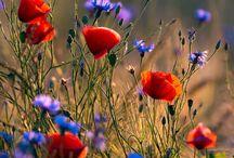 Цветы,природа