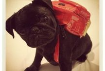 Adorable Dogs in Backpacks