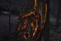 BIOLUMINESCENT FOREST / Friedrich van Schoor a Tarek Mawad vytvořili pomocí videomappingu bioluminiscentní les. Šest týdnů strávili v lese a nechali se fascinovat tichem a přirozeným životem. Pomocí precizní projekce zachycené kamerou a dokreslenou vhodnou hudbou rozzářili stromy, pavučiny, drobné rostliny i živočichy. Dali lesu jiný pulzující život, který je fascinující. Na videu nebyla použita žádná digitální postprodukce.