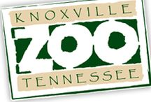 Things To Do In Knoxville, Tennessee / Discover fun and unique events that you won't want to miss in the Greater Knoxville, Tennessee Area.  / by Transfiguring Adoption