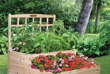 Garden & Pool Ideas