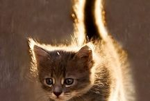 gatinhos :3