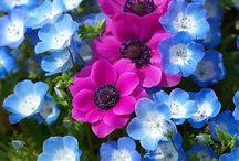Bloemfoto's / bloemen algemeen