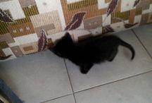 bb gato