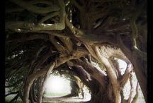 Trees of Mother Nature