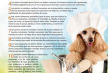 catering canina
