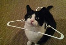 Hangers!! let me help you! / love , hate  don't care! but don't forget my food!!