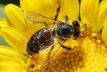 Honey / Bal / http://bubenimkoyum.org/bal-kovaninda-devrim/