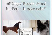 Hundeblogs