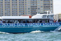 Sea Adventures / by Virginia Aquarium & Marine Science Center