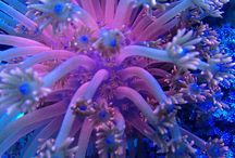 Live coral / Here's some corals that I've kept throughout the years.