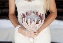 Protea troue