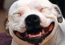 cute Dogd