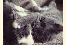 Kissamaista menoa :-)