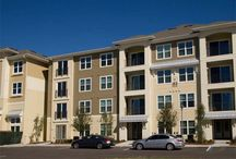 St. Petersburg apartments for rent / The best apartments to rent in St. Petersburg, FL!