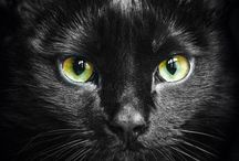 Katzen schwarz