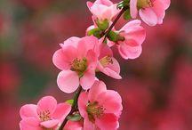 Kukkivat puut ja pensaat