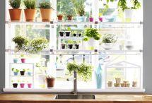 indoor planting ideas