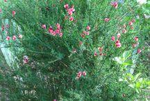 How to grow biblical plants in the garden
